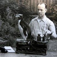 а сколько весит пингвин :: Олег Лукьянов