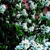 Всё цветёт :: Лебедев Виктор