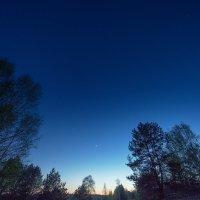 На лес спустилась ночь :: Наталья Петрова