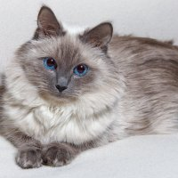 Кошка :: Nikolay Ya.......