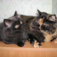Кошка и котенок :: Мама Диаша