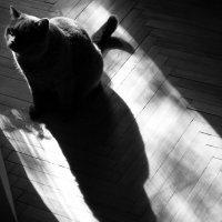 Кот и его тень :: Татьяна [Sumtime]