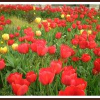 Море цветов :: Татьяна Пальчикова
