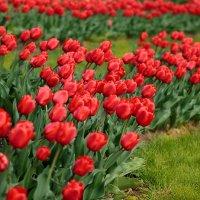 просто весна :: Евгений Никифоров