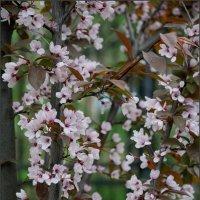 Цвет весенний :: Наталья Rosenwasser