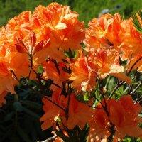 Южные цветы :: Владимир Бровко