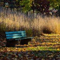золотая осень :: Olga S