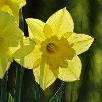 Солнышко и цветку приятно. :: Владимир Гилясев