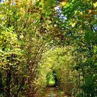 Тропинка в осень :: Наталия Маркелова