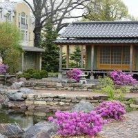 Японский садик :: Елена Павлова (Смолова)
