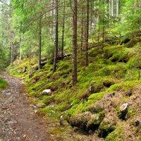 Карпатский лес... :: Андрей Зелёный