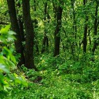 Весенний лес :: Ирина Остроухова