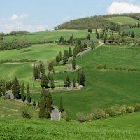 Пьяная дорога в Тоскане :: Ирина Кубарская
