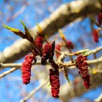 Весна пришла :: Екатерина Бильдер