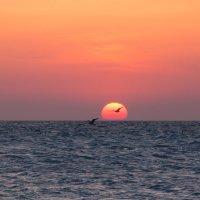 Черное море... :: вадим климанов