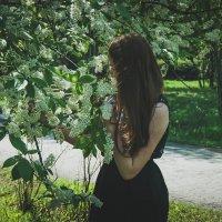 Душистая черёмуха :: Света Кондрашова