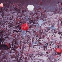Просто цветы :: Владимир Марков