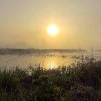 Туманное утро мая :: Павлова Татьяна Павлова