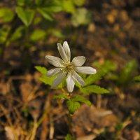 цветок. :: petyxov петухов