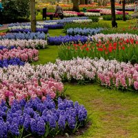 Tulips in Holland 04-2015 (15) :: Arturs Ancans