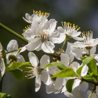 Весна в саду :: Elena Ignatova