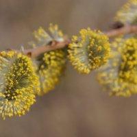 Весенние цветы :: Кирилл Фигура