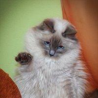Дай пять! :: Nikolay Ya.......