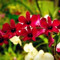 Орхидея :: Александр Шевченко