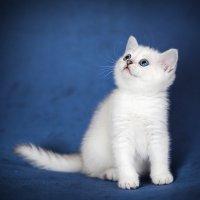 Котята :: Sergey Tyulev