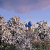 Цветут сады в Коломенском! :: Nikanor