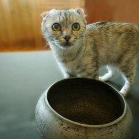 Суп из кота....??? (Или у страха глаза велики) :: Валентина Налетова