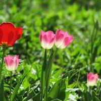 ...просто весна.. :: Ирина Тазеева
