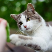 милый котик :: Анна Вершкова