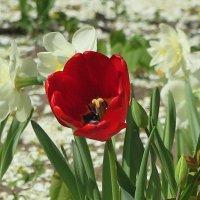 ...аленький цветочек... :: Ирина Тазеева