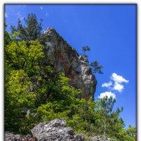 ...и на камнях растут деревья :: Sergey Bagach