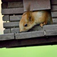 Куда пропадают орехи? :: Юрий Анипов