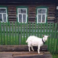 В деревне.... :: Елена