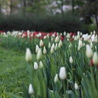 Весна,весна... :: Дина Нестерова