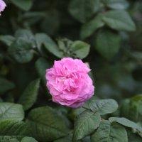 Цветочный хоровод-21. :: Руслан Грицунь