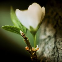 Весна :: Андрей Стародубов