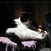 Я на солнышке лежу... :: maxim