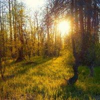 Лес легок и светел. :: Ирэна Мазакина