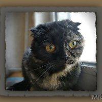 Кошки тоже умеют грустить и печалиться!! :: Людмила Богданова (Скачко)
