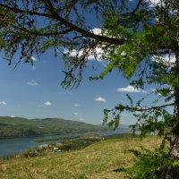 Пейзаж в обрамлении лиственницы :: Светлана Грызлова