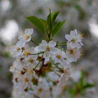 Весна пришла :: Надежда Баликова