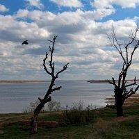 Мёртвые деревья :: Dr. Olver  ( ОлегЪ )