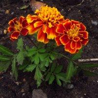 Любят ли физики цветы? :: Андрей Лукьянов