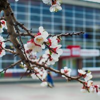 Весна :: Павел Яновский