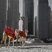 Бедуин и город. :: Сергей Калиновский