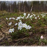 Весна идёт.. :: Любовь Чунарёва